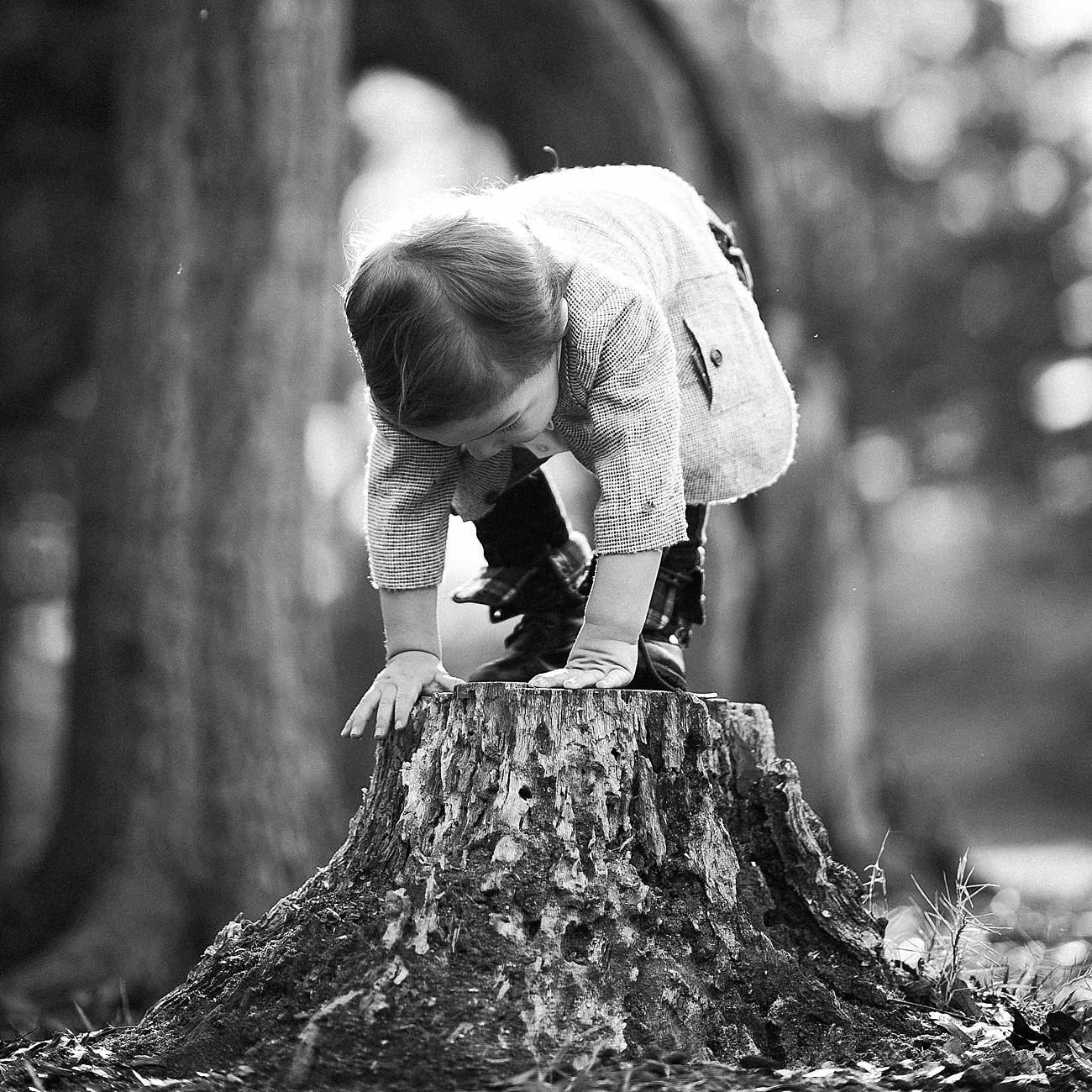 Little boy climbs on a stump at Westminster Park, Rock Hill, SC